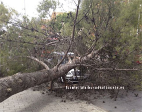 Un árbol se desploma sobre un taxi con su conductor dentro
