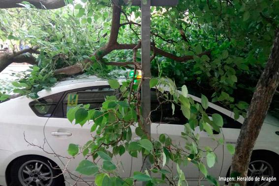Un árbol se parte en dos y cae sobre un taxi